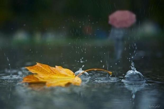 На Закарпаття прийде дощ і похолодання