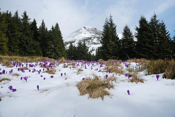 Якою буде цього року Закарпатська зима і яку погоду чекати на Новий рік