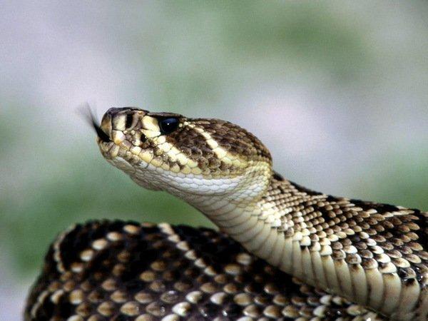 Шок! Дитина загризла отруйну змію