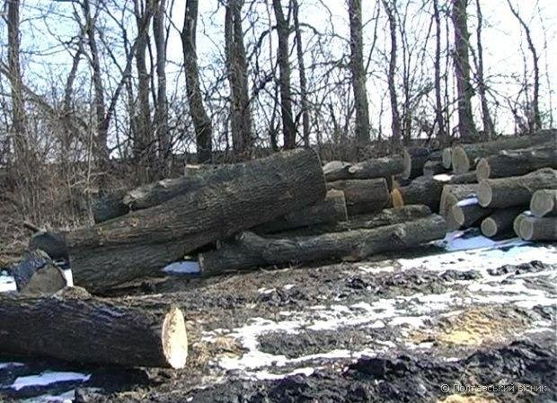 На Скадовщині військовослужбовці знищили 96 живих акацій
