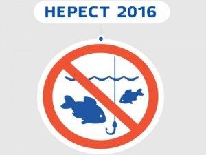 Мешканці Тячівщини, з 1 квітня рибалити заборонено!