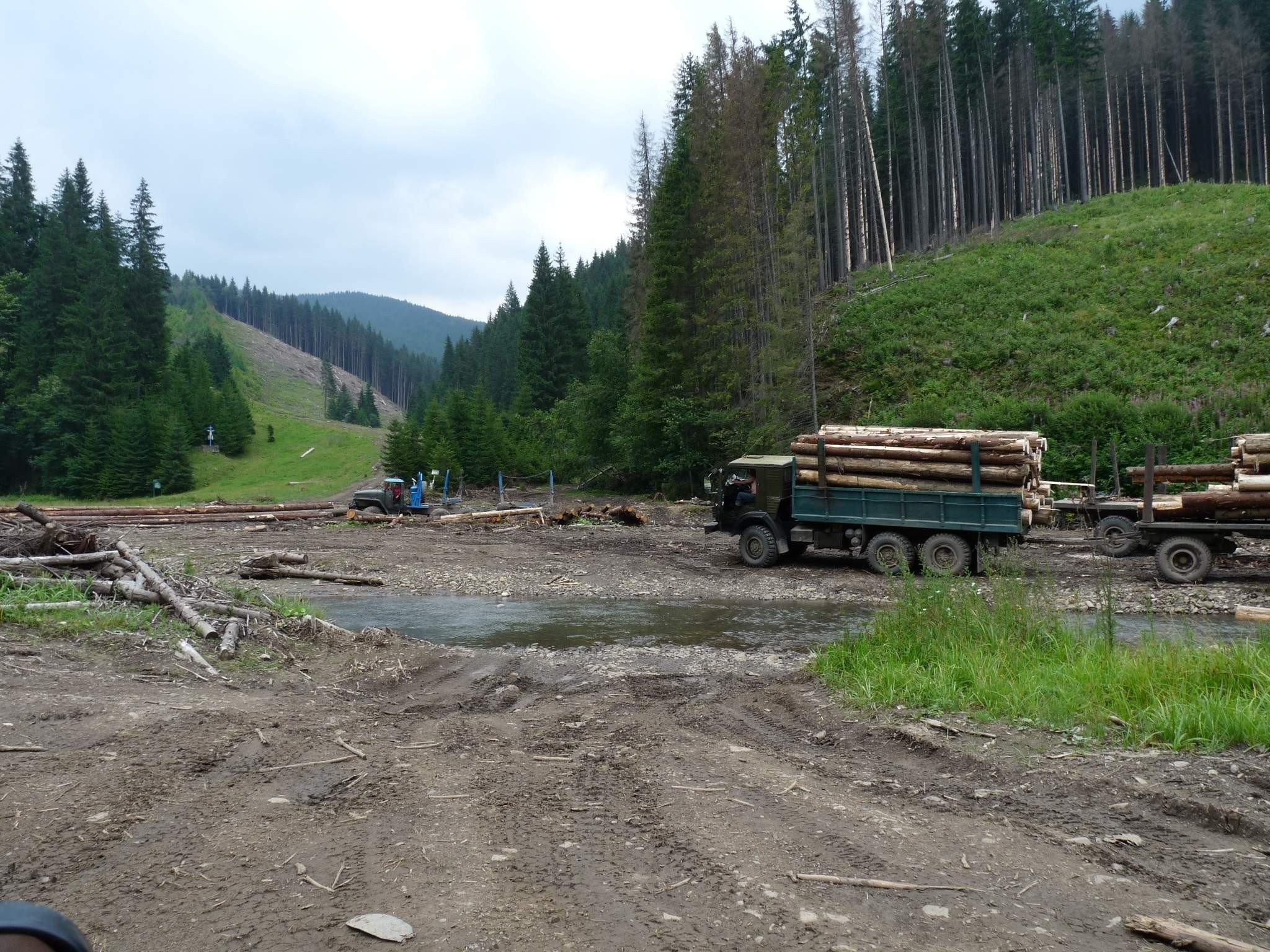 Уряд заборонив рубку в лісах і звільнив керівника Держлісагентства