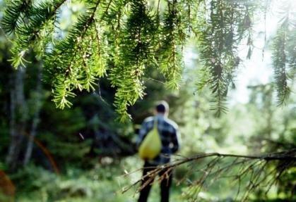 Під час збирання ягід у лісі заблукав 11-річний закарпатець