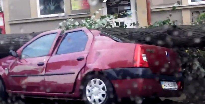 Повалені дерева, потрощені авто - наслідки сьогоднішньої зливи в Ужгороді(ВІДЕО)