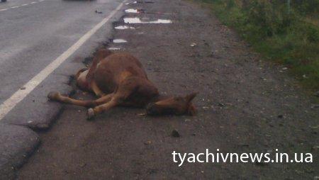 На трасі поблизу Тячева знайшли труп (ФОТО)
