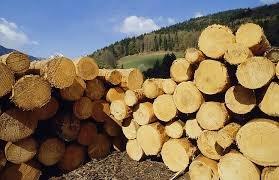 Брустурянський та Мокрянський лісгоспи – у числі найбільших реалізаторів деревини у області