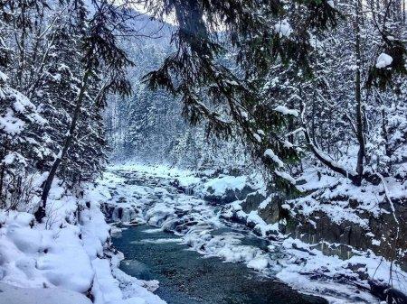 Краса зимового Закарпаття : дорога з Усть-Чорної у Брустури