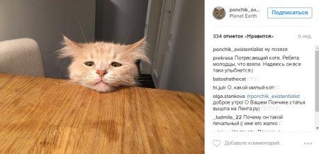 Від важкого життя на Росії депресують навіть коти