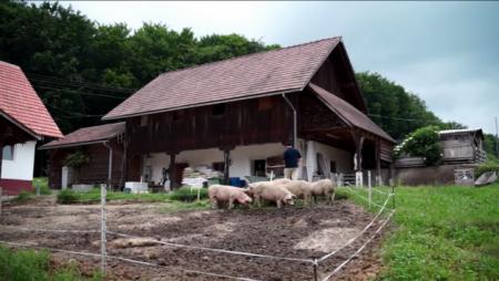 Покинути Францію, щоб відкрити еко-ферму на Закарпатті: цікаві історії