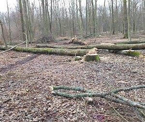 Трагедія в Карпатах: загинув лісоруб