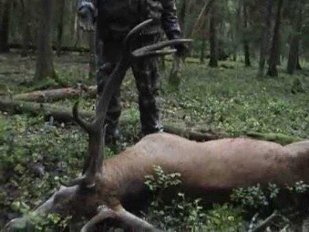 Бракон'єра, який вбив оленя на Берегівщині, вимагають притягнути до відповідальності