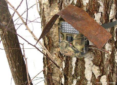 У Мокрянському лісомисливгоспі встановили фотопастки