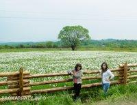 Масове цвітіння у Долині нарцисів біля Хуста очікується на початку травневих свят