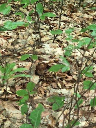 Спробуйте знайти: як на Закарпатті гриби ховаються в лісі (ФОТО)