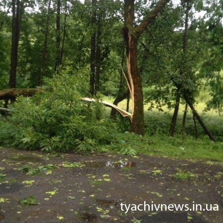 Буревій на Тячівщині валив дерева та зривав дахи (Фото)