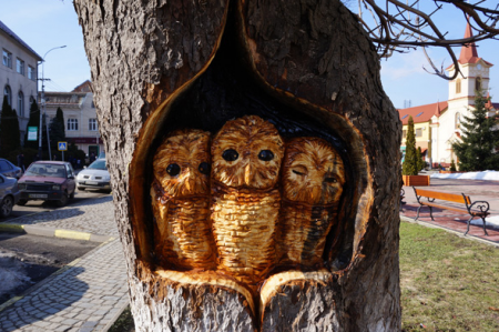 У старому каштані в центрі Тячева умілець вирізьбив совину родину (ФОТО)
