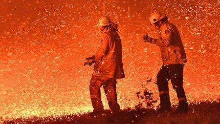 Страшні наслідки пожеж в Австралії: які ще одні масштабні втрати