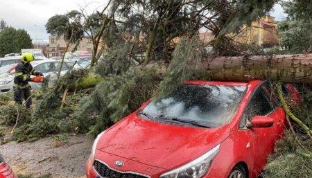 Чехію накрила потужна негода: повалені дерева та розтрощені машини -ЗМІ