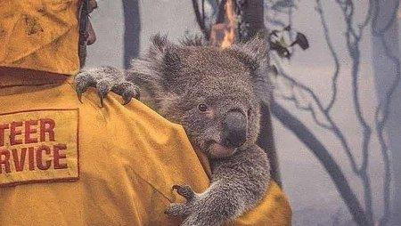 Внаслідок масштабних пожеж в Австралії 113 видів тварин можуть вимерти
