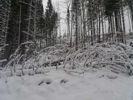 На Рахівщині лютнева стихія наробила лиха (ФОТО)