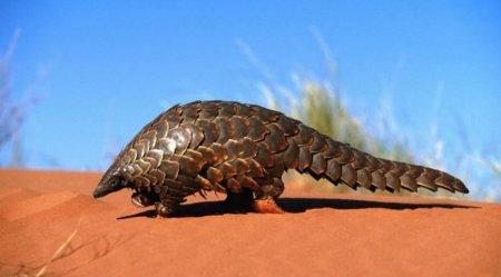 Змії не винні: вчені визначили тварину-переносника COVID-19
