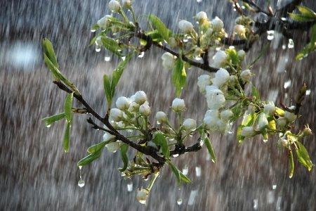 Заморозки і дощі: синоптик шокувала прогнозом погоди на кінець травня