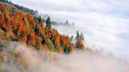 На Закарпатті очікуються тумани та потепліє до +22